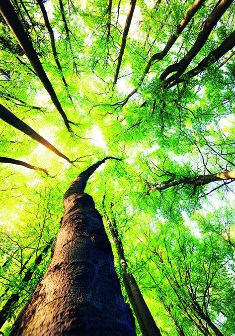 PSA-Schwerpunkt: Nachhaltigkeit im Arbeitsschutz